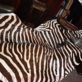 wandel-antik-01125-echtes-zebrafell