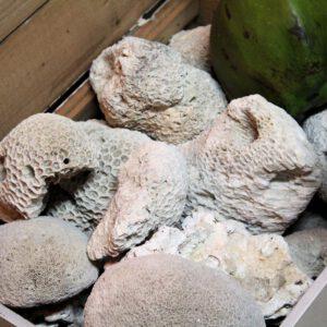 wandel-antik-01050-korallen