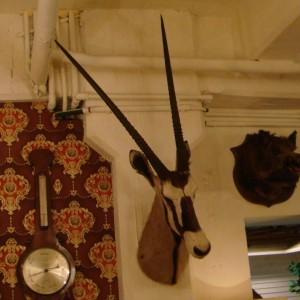 wandel-antik-01151-kopf-einer-oryxantilope