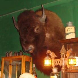 wandel-antik-01274-kopf-eines-bisons