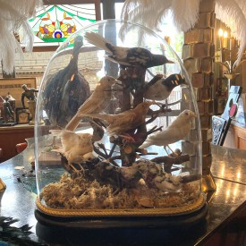 wandel-antik-03439-vögel-unter-einer-glasglocke